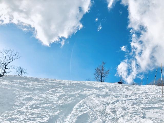 アルペンスキーとは|スキーの基礎知識