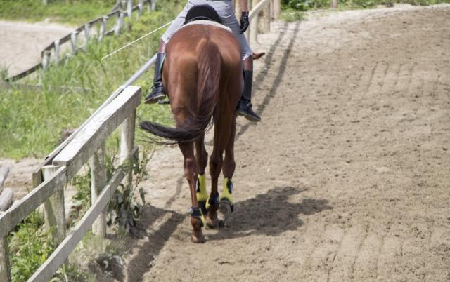 蹄の手入れのやり方 | 乗馬前の準備