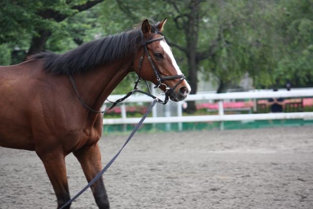 円形馬場でのバランスの保ち方|乗馬の馬場での練習