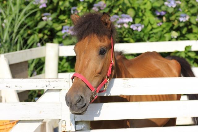 みんなに知ってほしい乗馬の魅力とは?