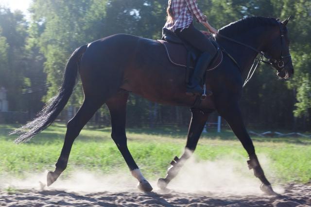 駈歩を安定させるポイント | 乗馬の基本