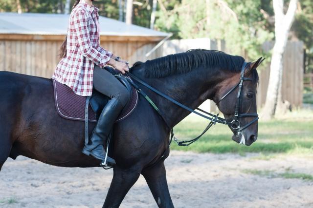 短鞭を使うタイミングと正しい使い方 | 乗馬の基本