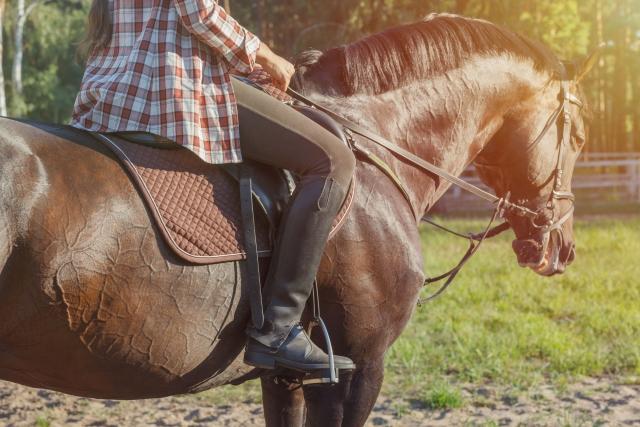 馬上体操について | 乗馬の基本
