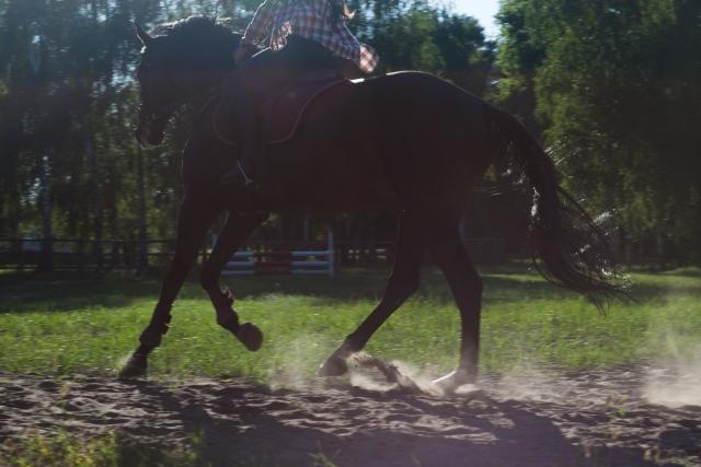斜め手前の変え方のポイント 乗馬の馬場での練習