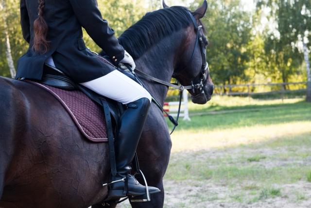 乗馬のライセンス制度について