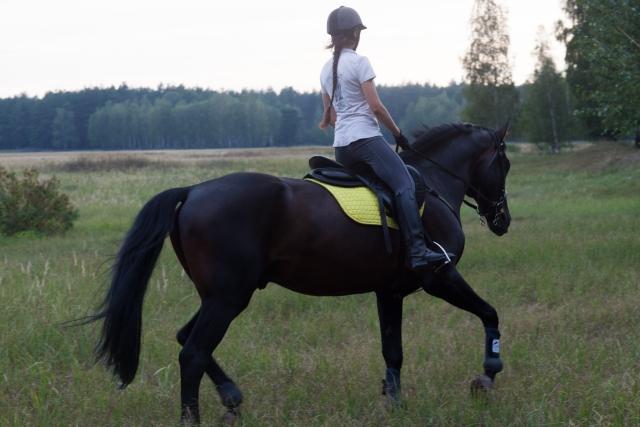 暴走する | 乗馬時の馬の問題行動と対処法