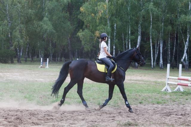 騎座の正しい使い方|乗馬の馬場での練習