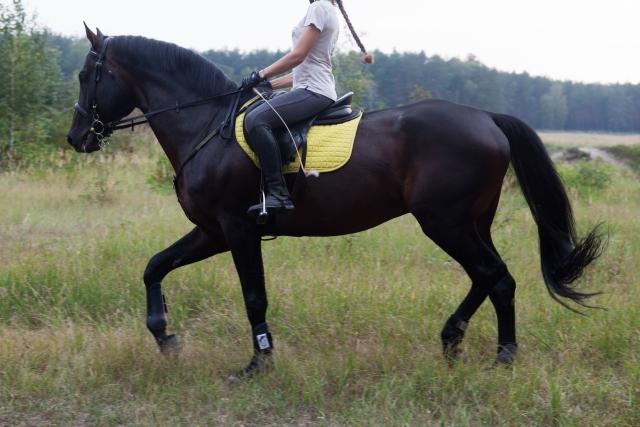 膠着する   乗馬時の馬の問題行動と対処法