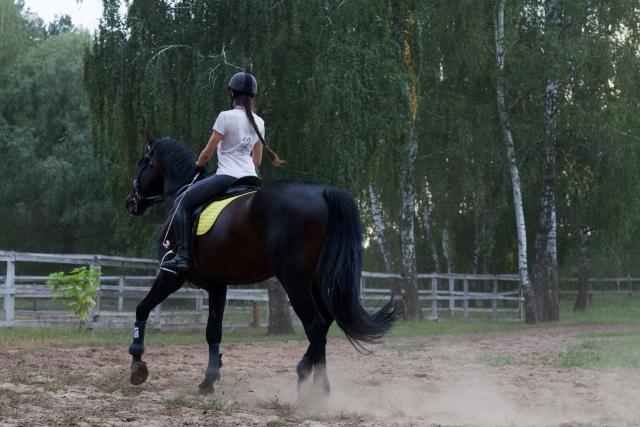 頭を上下に振る   乗馬時の馬の問題行動と対処法