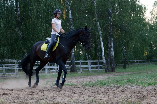 舌鼓と掛け声の使い方|乗馬の馬場での練習