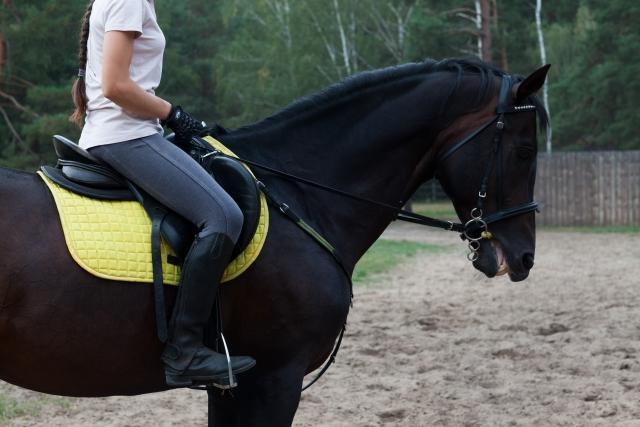 頭絡と手綱の正しい掛け方 | 乗馬前の準備