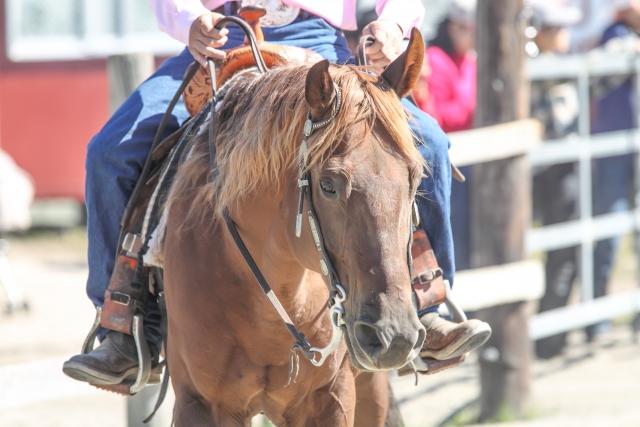自宅でできる乗馬の鐙の踏み方の練習方法