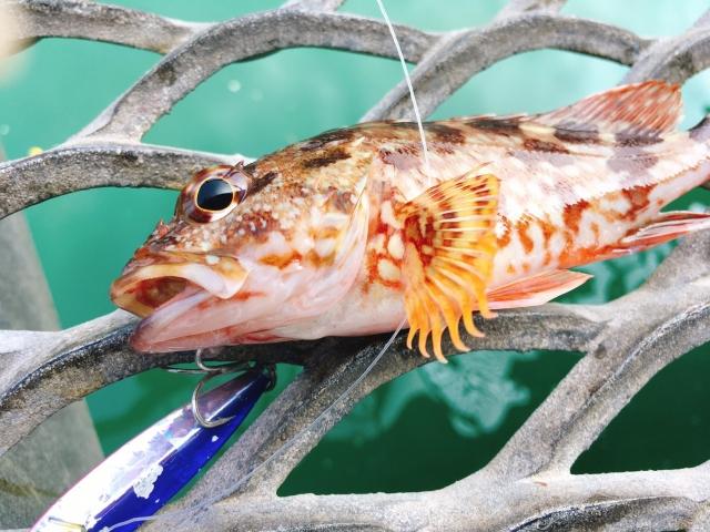 海釣りにおける安全なハリの外し方