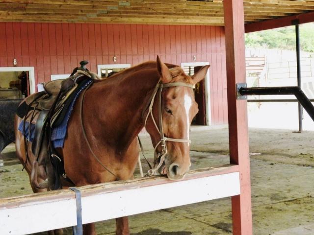 馬房での馬への近づき方と注意点 | 乗馬前の準備