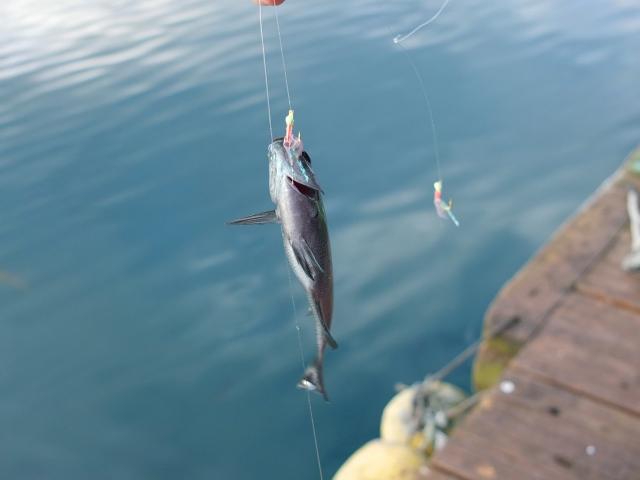 堤防でのサビキ釣りの基本的な釣り方