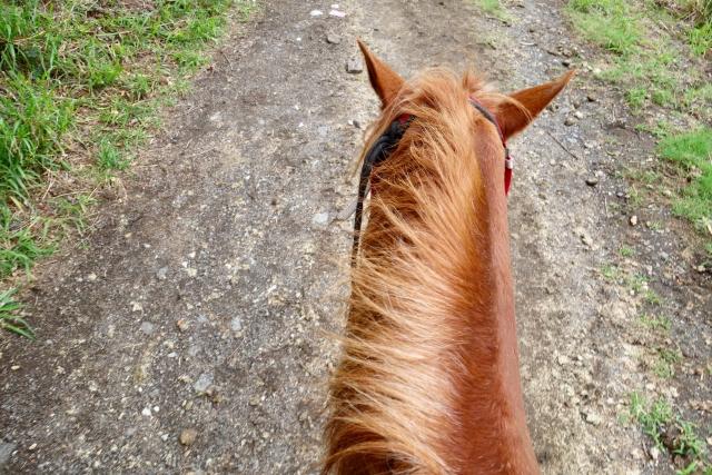 軽速歩を安定させるポイント   乗馬の基本