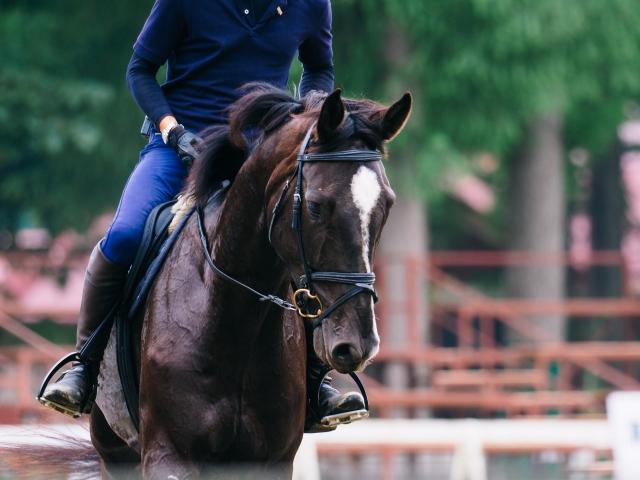 馬術競技の種類|乗馬の基礎知識