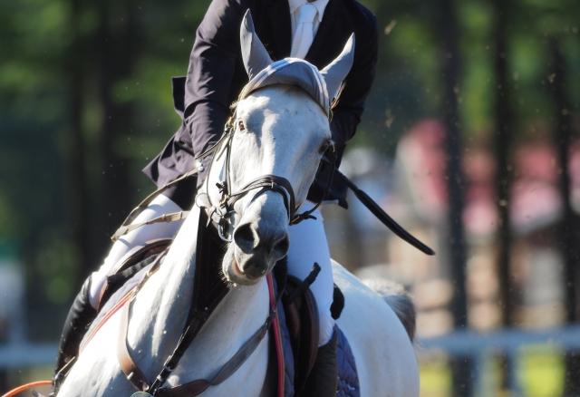 乗馬競技会の服装|乗馬の豆知識