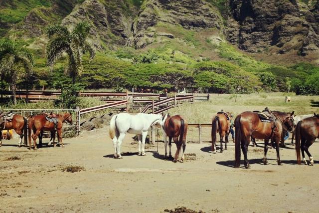 馬の毛色について | 乗馬の基礎知識