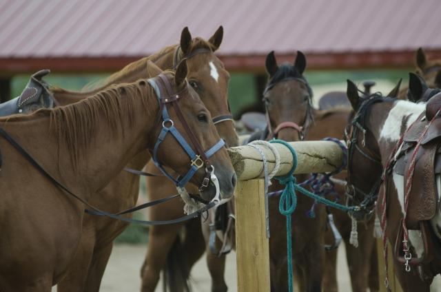 部班運動について|乗馬の基礎知識