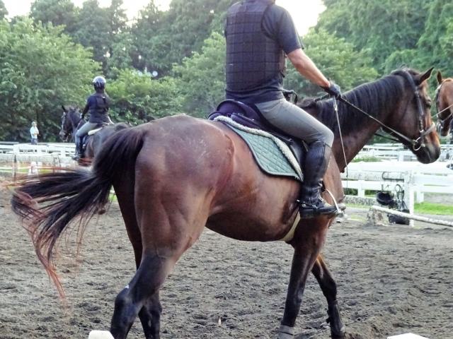 乗馬クラブのシステムについて|乗馬の豆知識