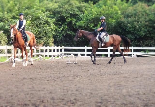 乗馬クラブのインストラクターになりたい