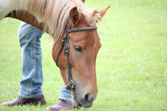 馬が身につけやすい悪癖 | 乗馬の豆知識