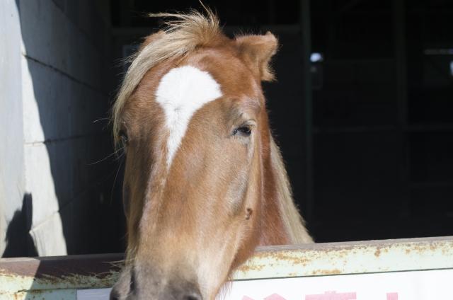 馬の種類について|乗馬の基礎知識