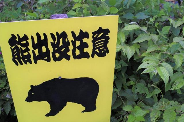 熊・ヘビ・スズメバチの注意点 | 大人の登山入門