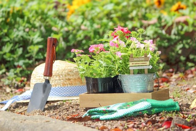 趣味としての園芸の魅力とはじめ方