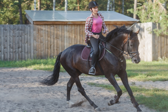 趣味としての乗馬の魅力とはじめ方