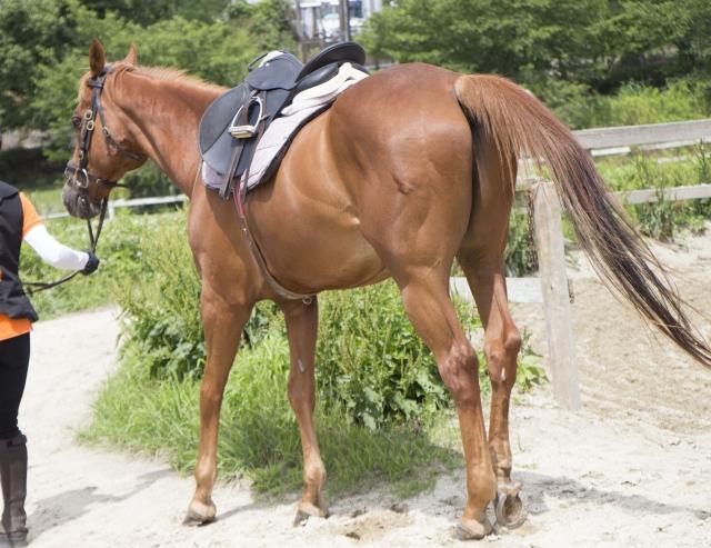 乗馬が上達する筋トレメニュー