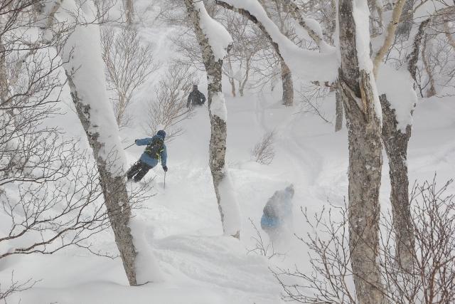 林間滑走での枝の避け方との注意点   スキーの滑り方