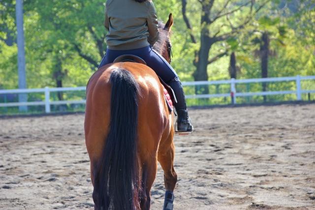 駈歩で後橋に腰かけてしまうときの改善方法 乗馬の馬場での練習