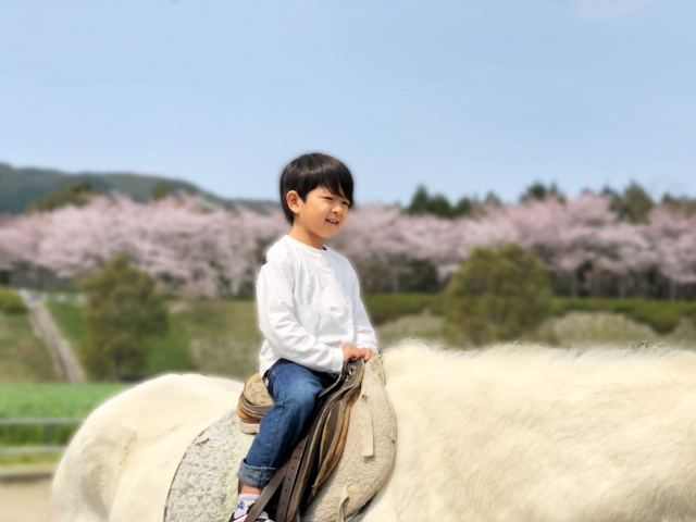 子供に乗馬を習わせるメリット・デメリット
