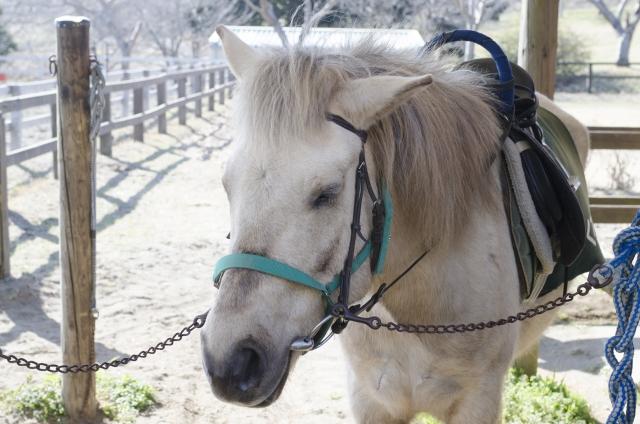 馬のしぐさでわかる事 乗馬の基本