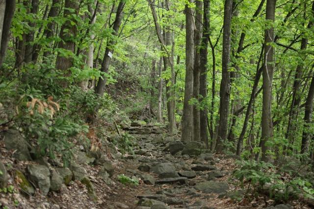 山の難易度の見分け方|大人の登山入門